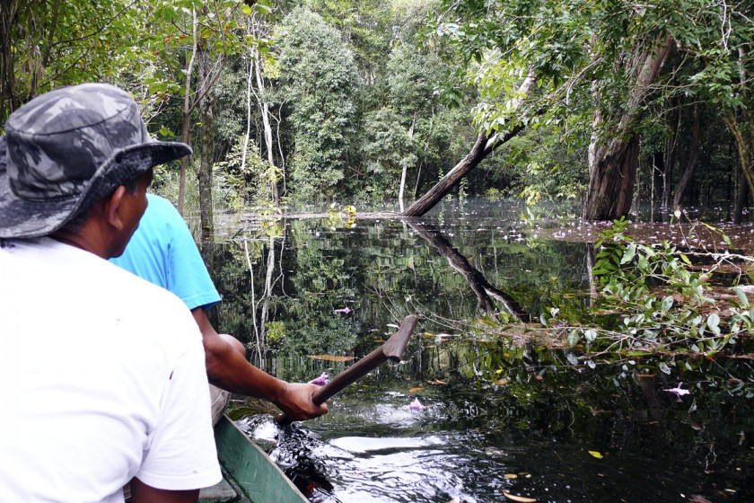 Exploring the flooded igarapé rainforest by canoe