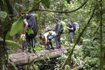 On the way to Mount Caburaí through the dense rainforest